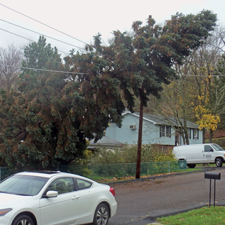 Nw Tree Pros Tree Removal Services In Portland Metro Nw Tree