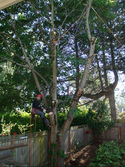 Multnomah Co tree care experts