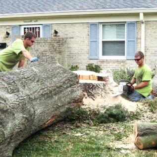 Tree Removal Beaverton OR