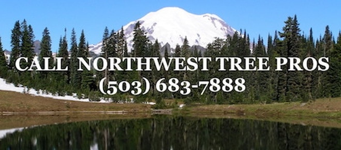 CALL NORTHWEST TREE PROS 503-683-7888